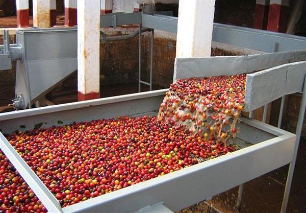 persnam.com.tw-kenya-wet-processing-coffee