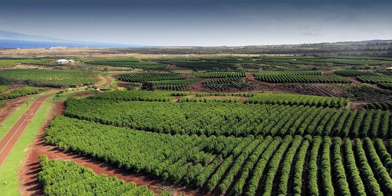 1-coffee-farm-orchard